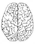 Adjoints and Brain Functors